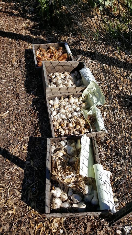 cloverfield organic